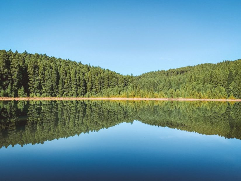 peaceful water forming a still mirror image in the lake surrounded by trees