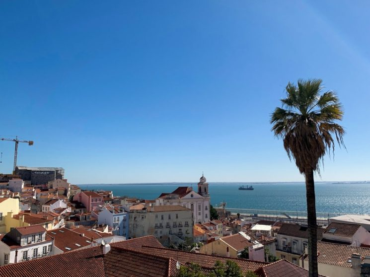 view of lisbon city skyline and rooftops with a palm tree on a sunny day with view of river
