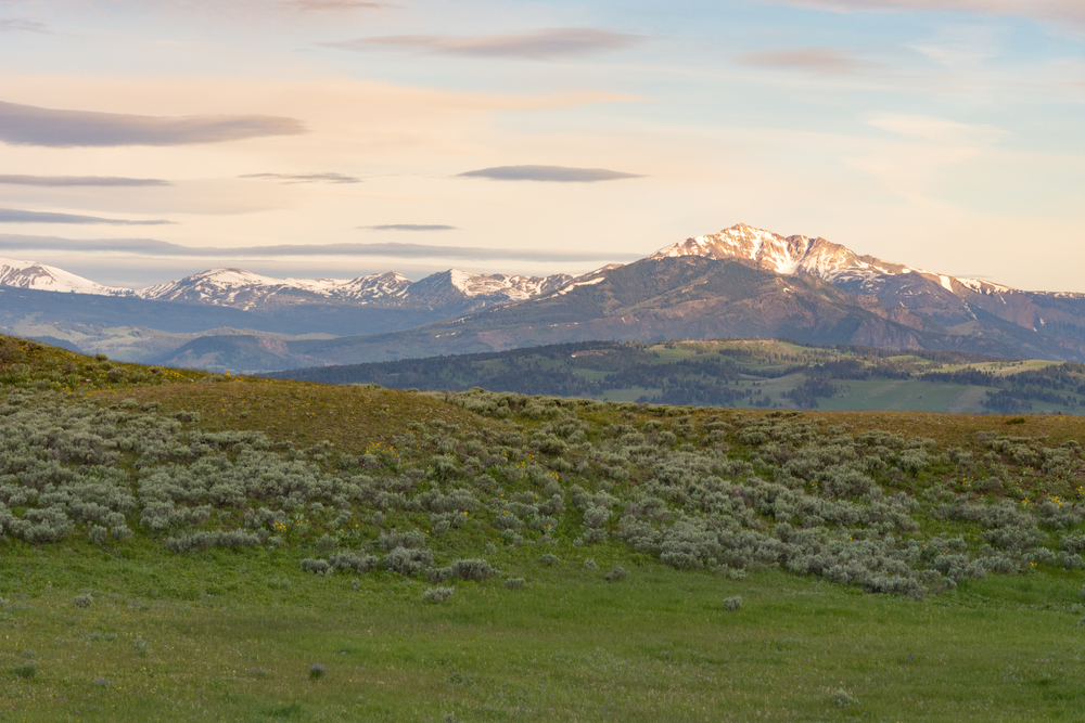 Late afternoon light falls onto the landscape on Blacktail Plateau, illuminating a distant mountain and a grassy plain.