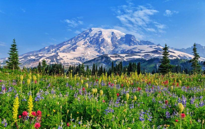 Wildflowers at Mount Rainier