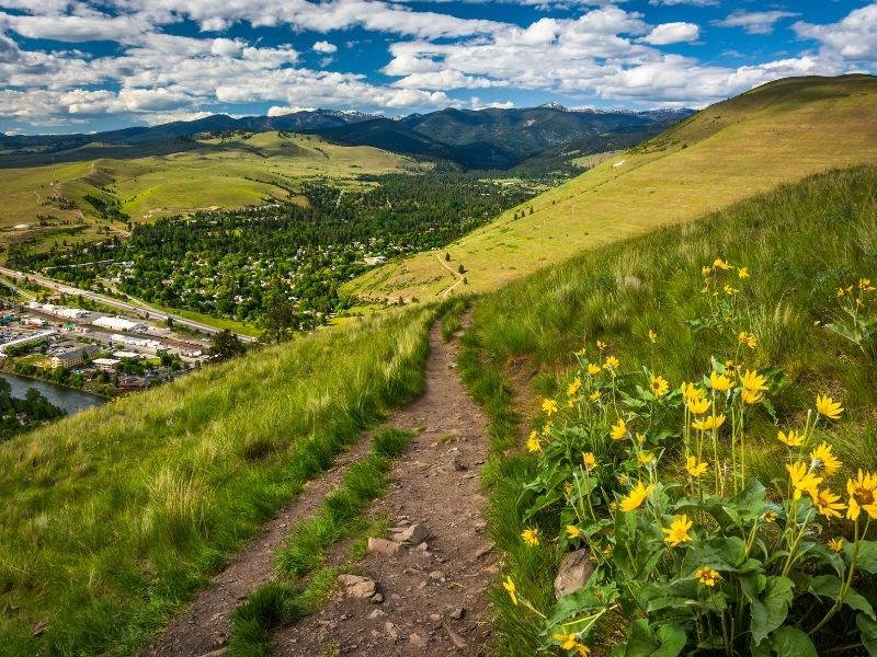 A hiking path above Missoula with wild yellow flowers next to the path, the city below, on a partly cloudy day.