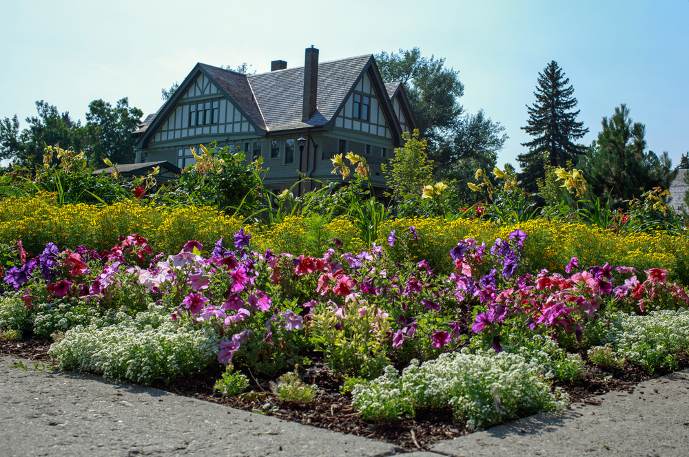 A bunch of landscaped flowers in front of a large house in downtown Bozeman.