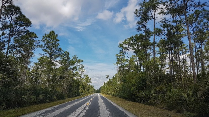 Road to the Visitor Center in Everglades National Park, a road passing through a forest with trees on either side.
