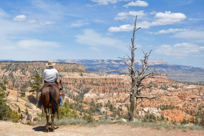Man on a brown horse wearing a cowboy hat and looking over the canyon views.