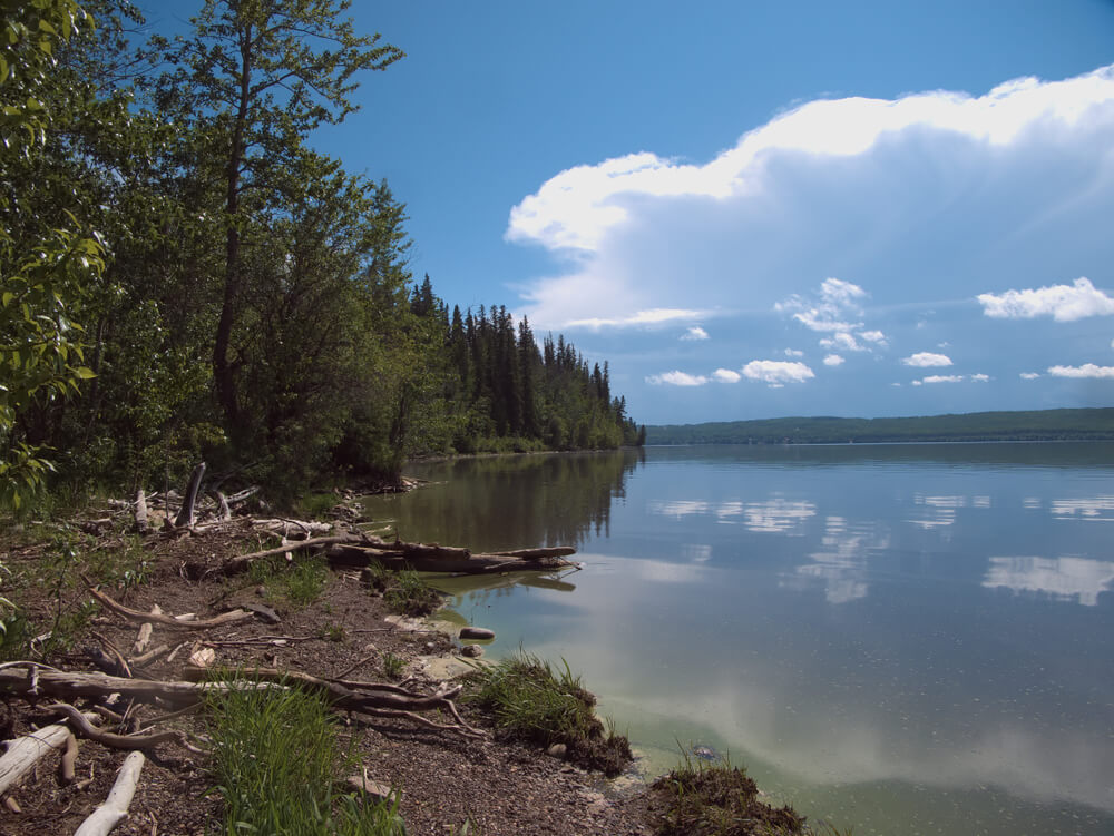 Logs and trees on the shore of a lake, which is still and mirroring the clouds above it.
