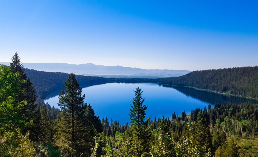 View over the sapphire blue Phelps Lake surrounded by pine forest on a clear, cloudless day with mountains on the horizon.