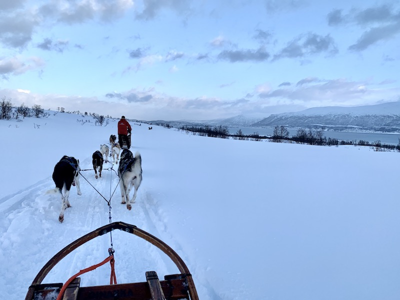 View from the dog sled over the beautiful landscapes of norway in winter