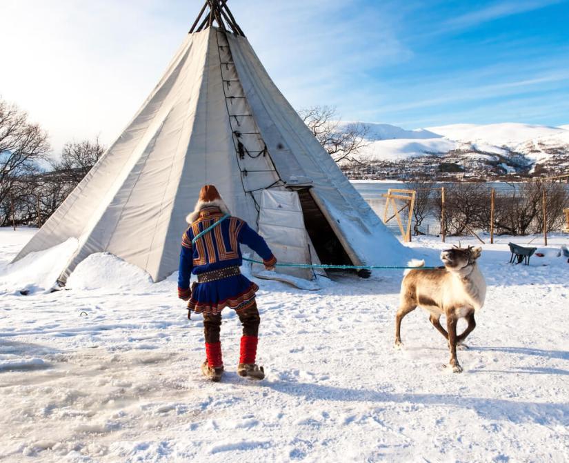 sami man lassoing a reindeer at a reindeer farm in tromso