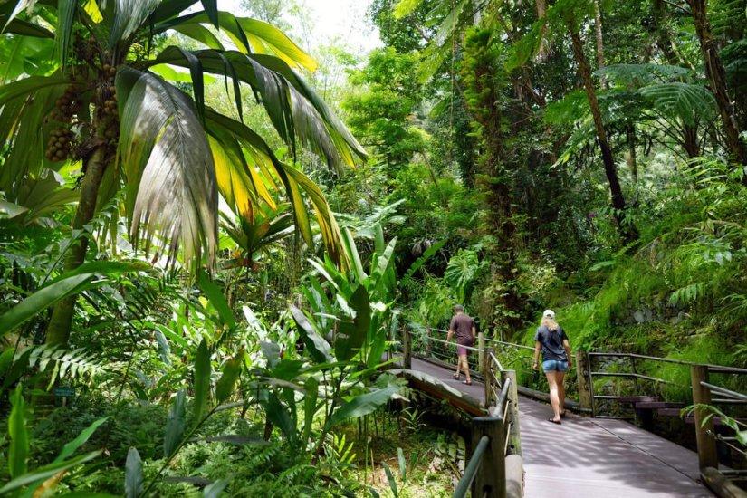 Tourist admiring lush tropical vegetation of the Hawaii Tropical Botanical Garden of Big Island of Hawaii