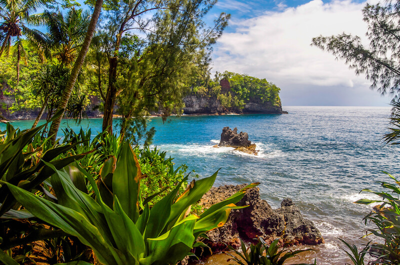 Plant life in front of one of the beaches of Hilo Hawaii