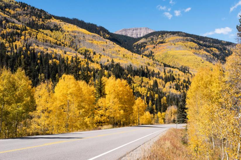 Fall colors of the yellow Aspens along the San Juan Skyway north of Durango Colorado.