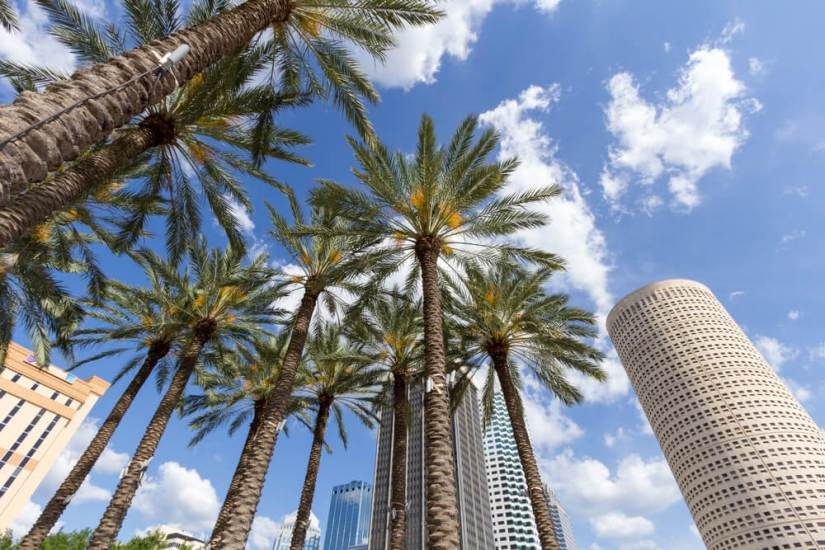 The downtown of Tampa Florida: palm trees, skyscrapers and a partly cloudy sky