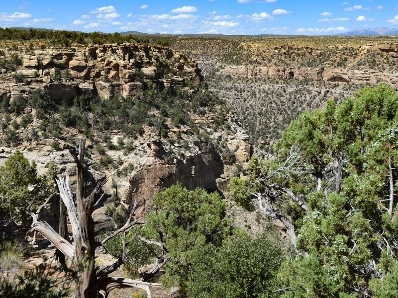 views over mesa verde with trees and cliffs and wood