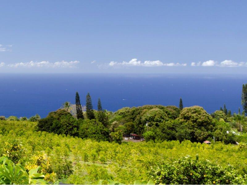 kona coffee farm on a hillside overlooking the ocean