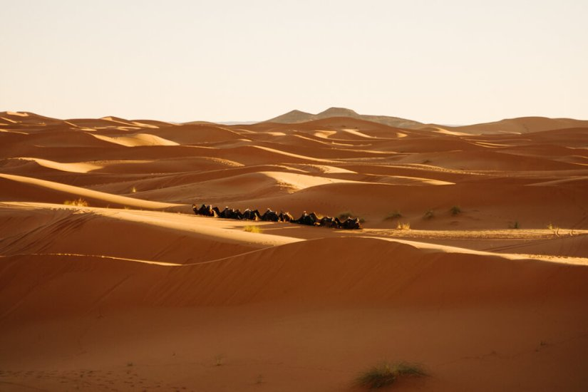 Photo of shadows in the sand dunes in the Sahara Desert in Morocco. A line of camels is walking in the desert on a sand ridge.