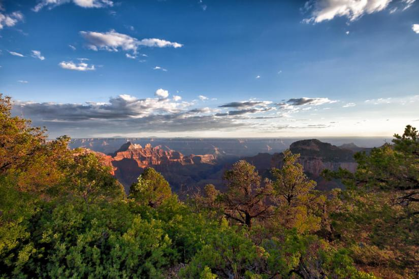 walking the transept trail towards bright angel point at sunset with trees and clouds and canyon