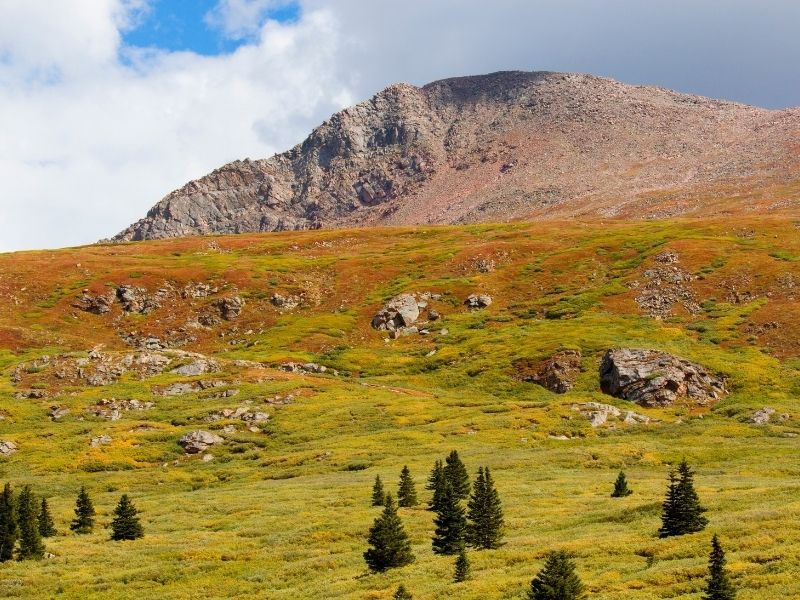the beautiful orange and green plains of the arapaho forest in autumn