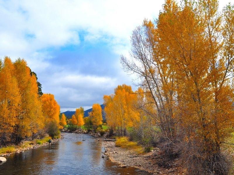 brilliant orange-yellow trees in estes park along a small river or creek