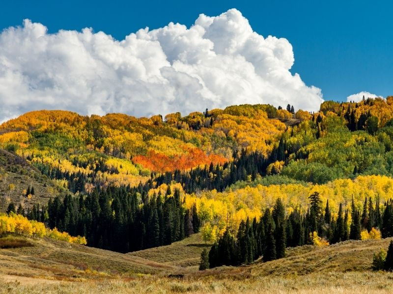 a large cumulus cloud over orange, yellow and green fall trees in steamboat springs colorado