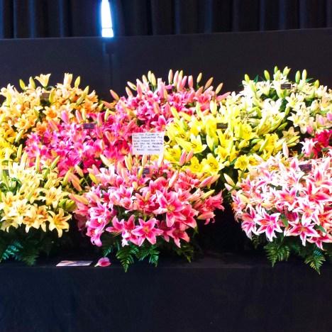 5 fiori tipici del Giappone (Parte 1)