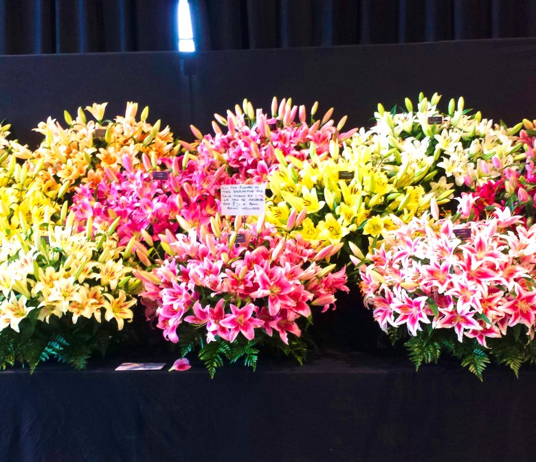 harrogate flower show lilium