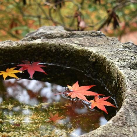 Autunno in Giappone: kuri, le castagne