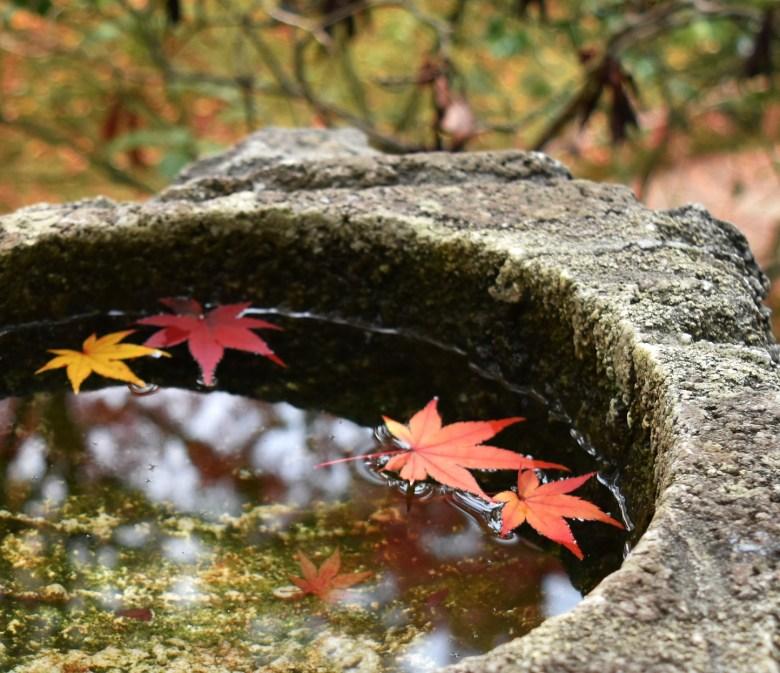 foglie autunno giappone momijigari