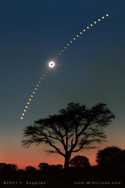 Eclipse sobre sobre uma acácia em Chisamba, Zambia, 2001 - Crédito©: Fred Espenak