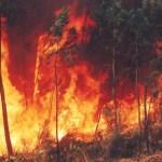 Planeta em chamas? O oxigênio que alimentou o fogo ao longo das eras…