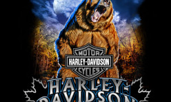 Harley-Davidson Grizzly Moon