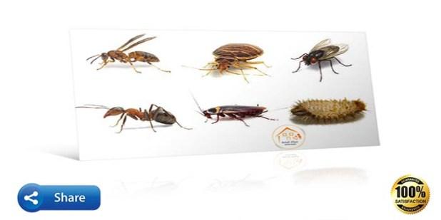 صورة حشرات