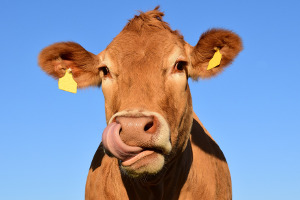 Pacer adds two new 'Cash Cow' ETFs