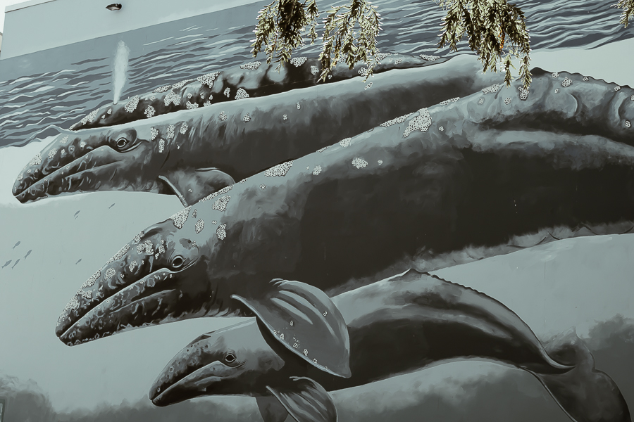 Wyland Whale Mural | White Rock BC