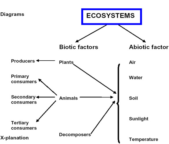 Biotic And Abiotic Factors In An Ecosystem Worksheet