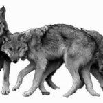 De ene mens is een wolf voor de andere