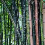 ¿Sabías que el bambú puede llegar a crecer un metro al día?