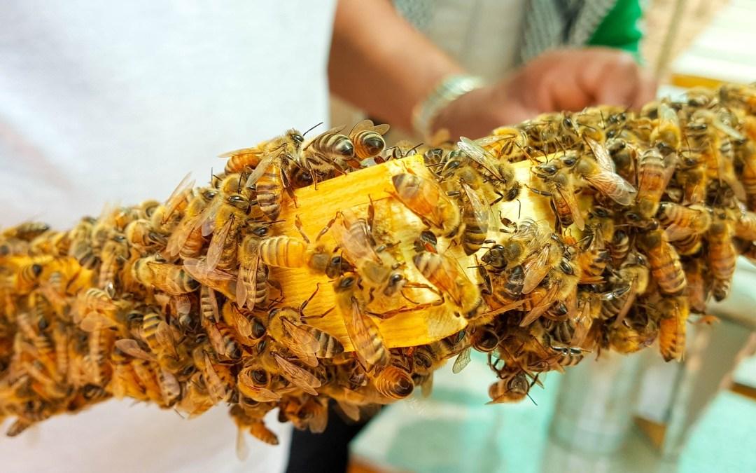 Είναι το μέλι προϊόν βίας; Γιατί δεν είναι vegan;