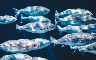 Μια Διαφορετική Οπτική για τα Ψάρια: Γιατί και Πώς να Τερματίσουμε το Ψάρεμα;