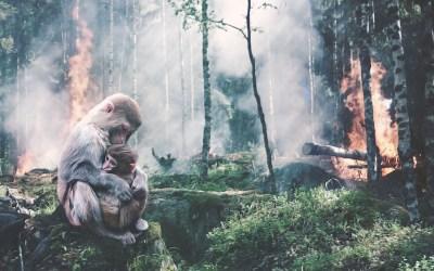 Ο καπιταλισμός ευθύνεται για τις φωτιές στον Αμαζόνιο κι όχι αποκλειστικά η κτηνοτροφία
