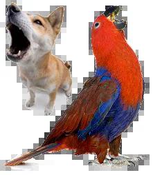 consulta comportamental terapia comportamental para cães