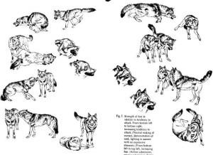Comunicação em cães