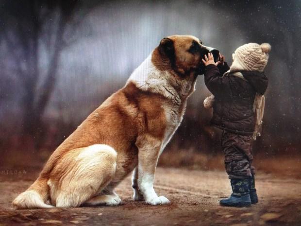 adestramento e terapia comportamental ethos animal helena truksa