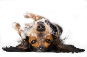 dog walker passeador de cães em são paulo