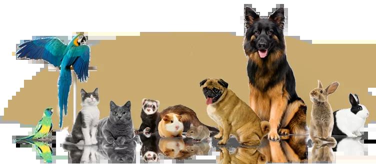curso-de-comportamento-animal-ethos-animal-cães-gatos-papagaios-silvestres-helena-truksa