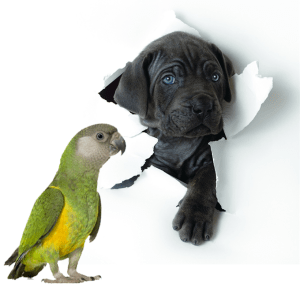 ethos animal comportamento e bem estar animal treinamento de animais silvestres exóticos e domésticos