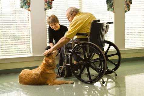 treinamento para animais terapeutas