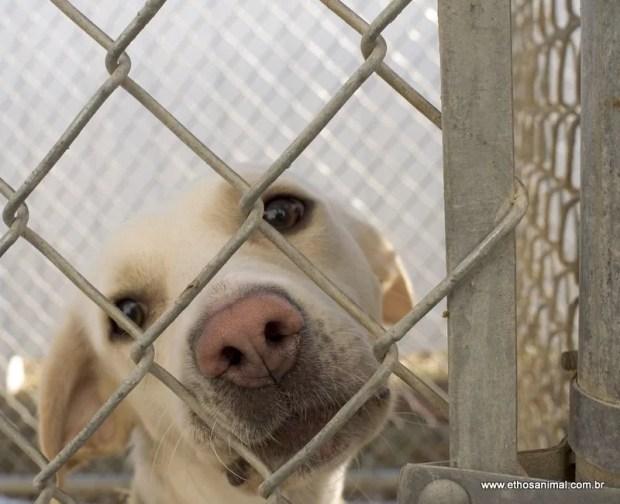adote um amigo animal adoção responsável ethos animal