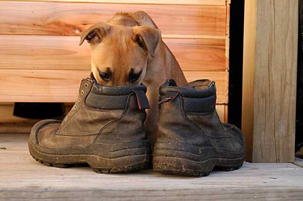cheiro do dono é recompensa para o cão