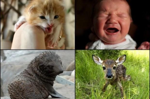 choros de bebês