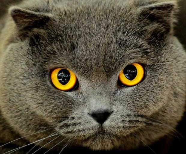 Comportamento dos gatos e os sentidos